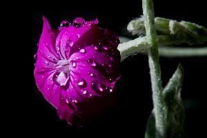 Blüte im Morgentau von Flowers by t.ART