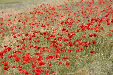 A lot Poppies von Yvonne Blokland