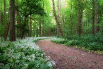 Daslook in het bos tijdens het voorjaar van Moetwil en van Dijk - Fotografie