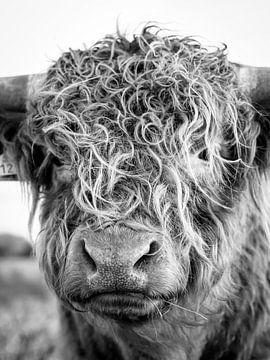 Schottischer Highlander schwarz-weiß von Marien Bergsma