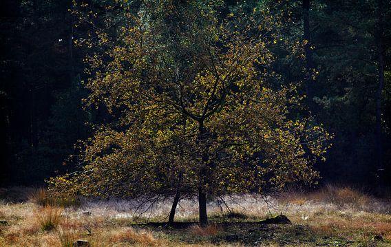 Loonse en Drunense Duinen van Christiaan Krouwels