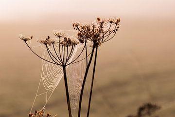natürliche art von Tania Perneel
