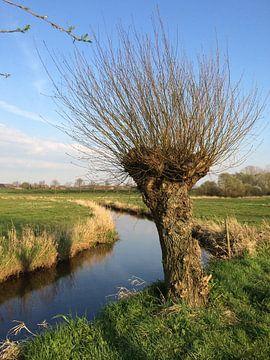 Mooie Knotwilg aan de waterkant van de rivier de Swalm. Limburgs landschap.  van Joost Brauer