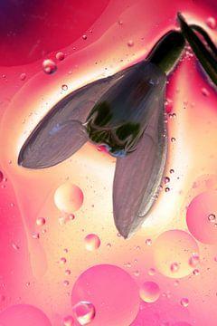 Fantasy Flower van Marcel van Rijn