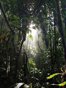 Jungle met een straaltje zon von Joelle van Buren