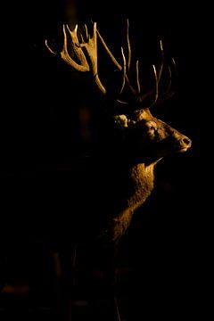 Bronze Rotwild im letzten Abendlicht von Jeroen Stel