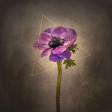 Grazile Blume - Kronen-Anemone | Vintage-Stil gold von Melanie Viola