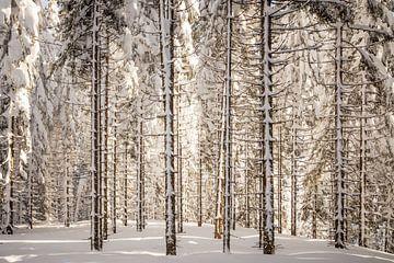 Boslandschap in de winter van Coen Weesjes