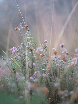 Blumen Teil 165