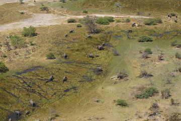 Olifanten in het water von Erna Haarsma-Hoogterp