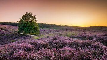 Sonnenaufgang Posbank von Rob Sprenger