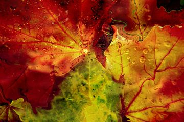 Herbstsynphonie van Heidrun Carola Herrmann