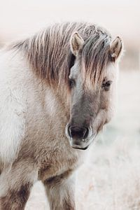 Portret van konik paard in Lentevreugd