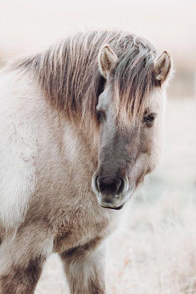 Portret van konik paard in Lentevreugd van Melissa Peltenburg