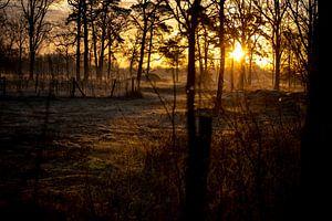 De stralen van het ochtendlicht door de bomen heen