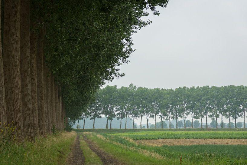 Populieren in Zeeuws-Vlaanderen van Michel van Kooten
