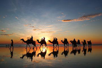 Zonsondergang met kamelen op het strand. Broome, Australië van The Book of Wandering