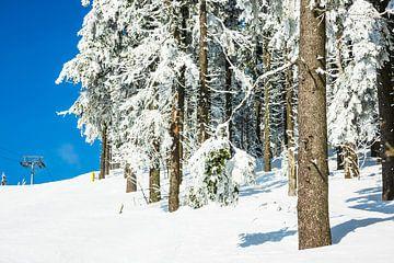 Winter im Riesengebirge bei Janske Lazne, Tschechien von Rico Ködder