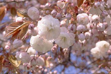 Blüte von Diana Mets