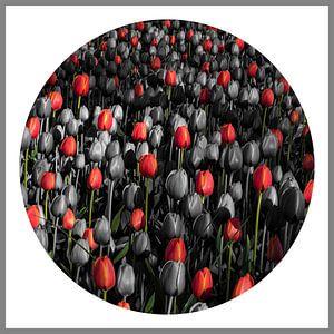 Compositie met tulpen van