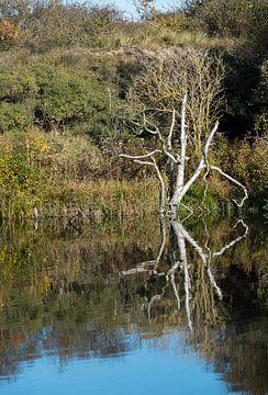 tree reflection in autumn van Compuinfoto .