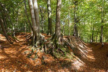 Bos van Albert Mendelewski