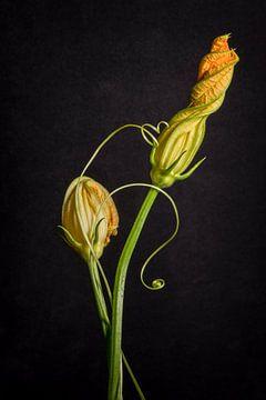 Stillleben der Zucchiniblume von Monique van Velzen