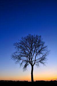 Winter boom tijdens zonsondergang