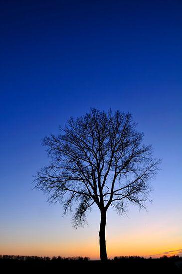Winter boom tijdens zonsondergang van Sjoerd van der Wal