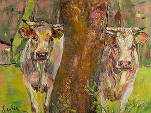 Deux vaches derrière l'arbre