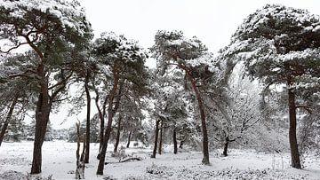 Winterlandschaft mit verschneiten Kiefern von Dick Doorduin