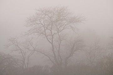 Waldlandschaft im Nebel von Dirk-Jan Steehouwer