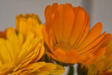 Liefde voor de kleur oranje in macro fotografie van J..M de Jong-Jansen