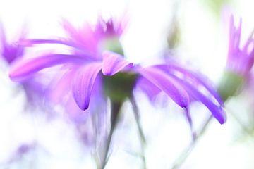 Aquarell Blume in Pastell von