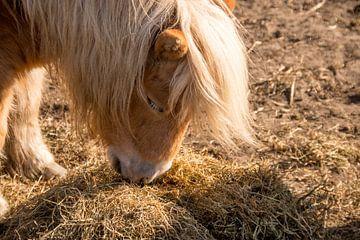 Etende pony van Esther's Photos
