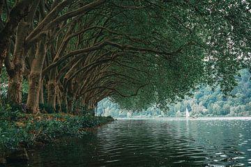 Mooie bomen aan het water van Arnold Maisner