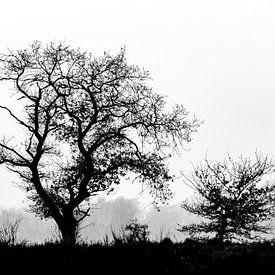 Des arbres dans le paysage mais en noir et blanc sur Menno Schaefer
