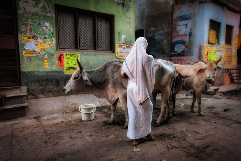 Sereen beeld van een vrouw die op haar koeien past in het centrum van Varanasi, India van Wout Kok