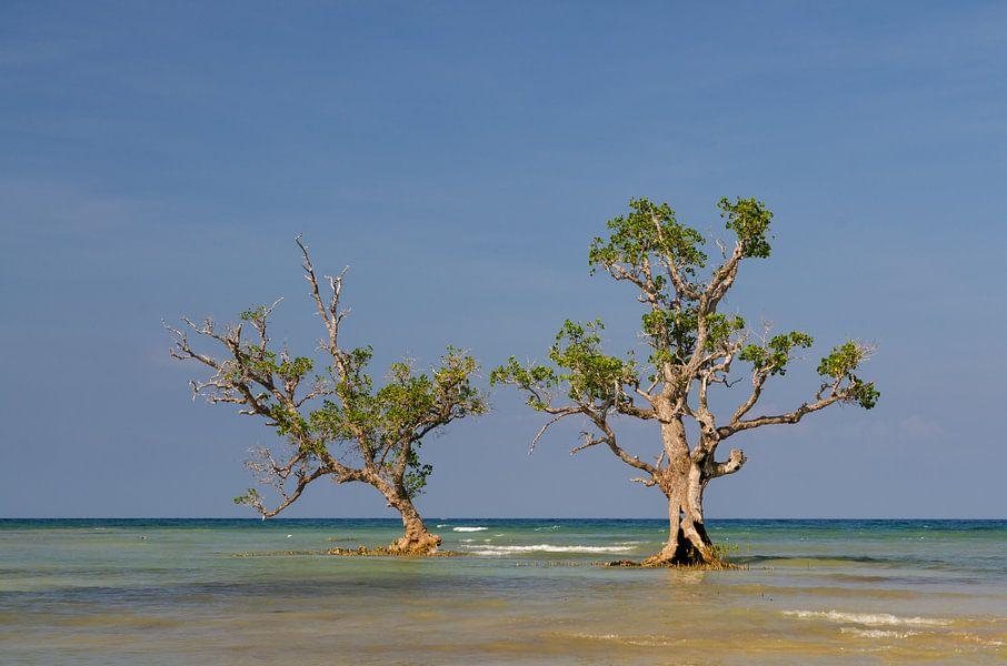 Mangrove bomen in het water.