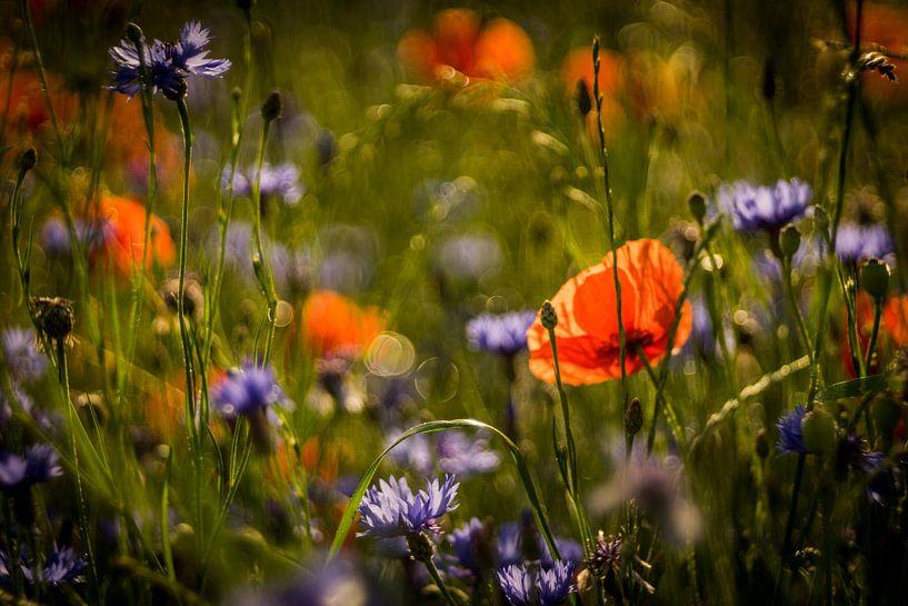 Blumenwiese von Udo Wanninger limitiete Auflage