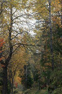Schöne Farbpalette, die nur der Herbst bieten kann von Kim van der Lee