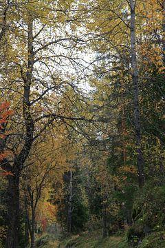 Mooi kleurenpallet wat alleen de herfst kan bieden van Kim van der Lee