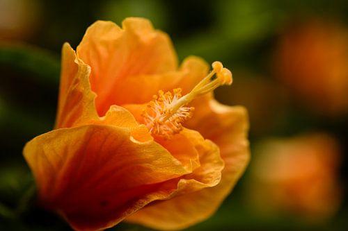 Oranje bloem op groen