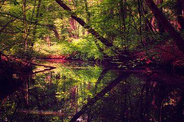 Reflecties in het Spanderswoud van gooifotograaf