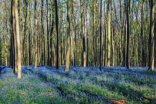 "Forest ""bluebells"" van"