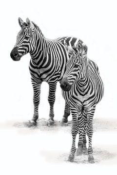 Zebra met  jong, zwart-wit (Dierenpark Emmen) sur Aafke's fotografie