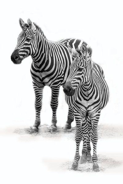 Zebra met  jong, zwart-wit (Dierenpark Emmen) van Aafke's fotografie