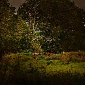 Hollands landschap in Drenthe met Schotse Hooglanders in de stijl van de oude meesters in de stijl v