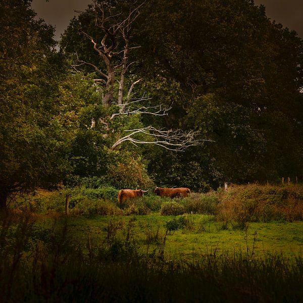 Hollands landschap in Drenthe met Schotse Hooglanders in de stijl van de oude meesters in de stijl v van ina kleiman
