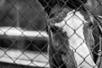 Paard achter het hek van Martijn .